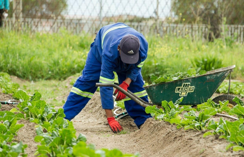 man farming in outdoor urban garden